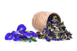 Kittel flower in basket